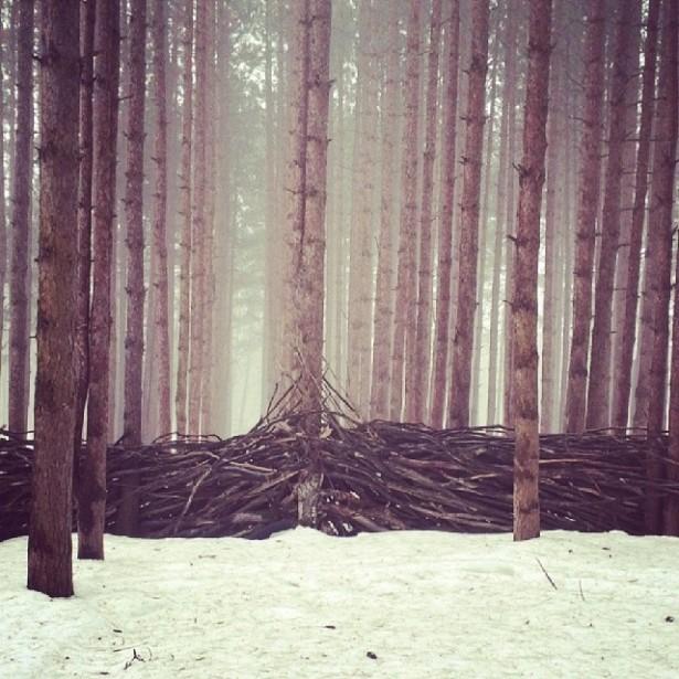 Electric Forest Snowy Walkthrough 18