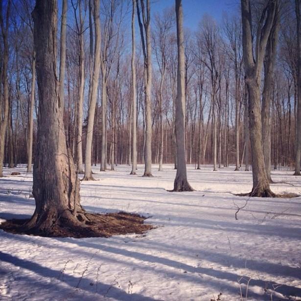 Electric Forest Snowy Walkthrough 7