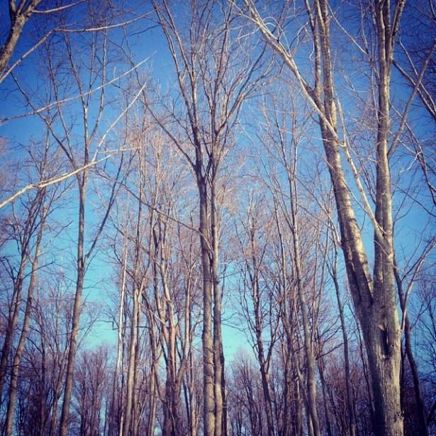 Electric Forest Snowy Walkthrough 8